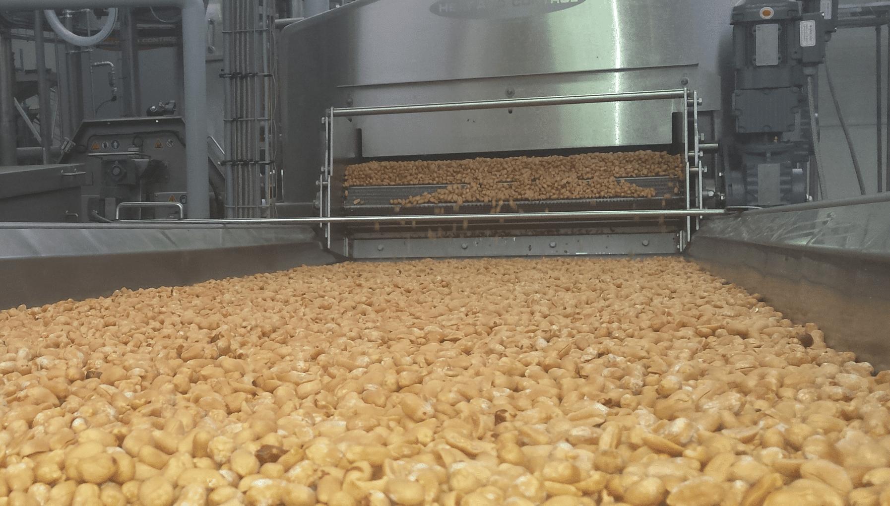 cacahuetes en proceso