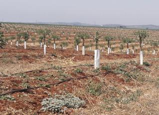 foto campos de cultivo