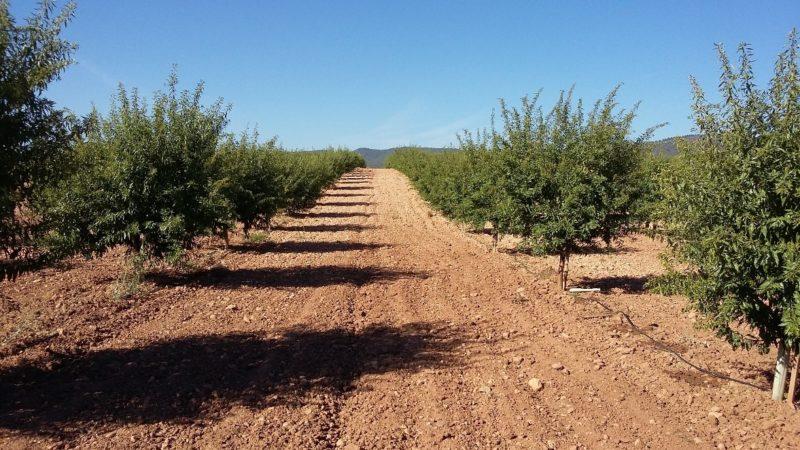 terrenos arboles importaco