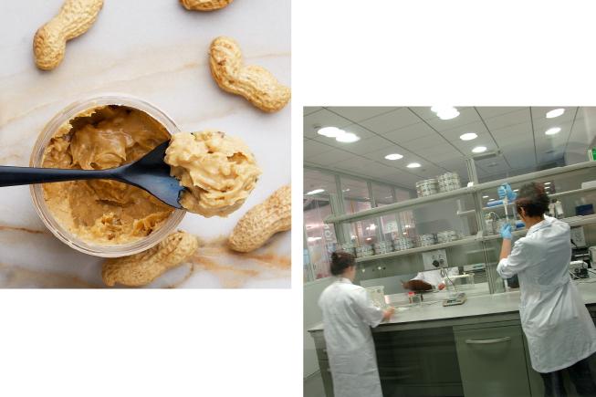 calidad-cacahuetes-al-por-mayor
